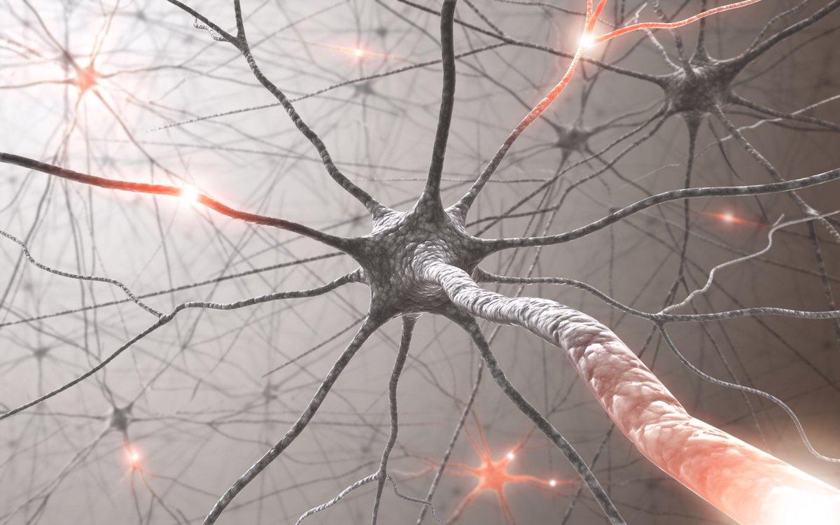test Twitter Media - How #Neuroscience shows   what's right and wrong with #AI   https://t.co/zjMyCa6PL8 #fintech #ArtificialIntelligence #MachineLearning #DeepLearning @bendee983 @bdtechtalks @pierrepinna @jblefevre60 @HaroldSinnott @Ronald_vanLoon @KMcDSAP @Thomas_Harrer @Fisher85M @terence_mills https://t.co/EWdpHkI9Eq