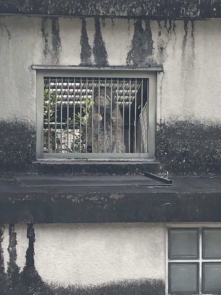 test ツイッターメディア - 東山動物園3 キメ顔シャバーニ 牢獄マヌルネコ スカイタワー展望台からの名古屋 スカイタワー https://t.co/IW5D3Sonvm