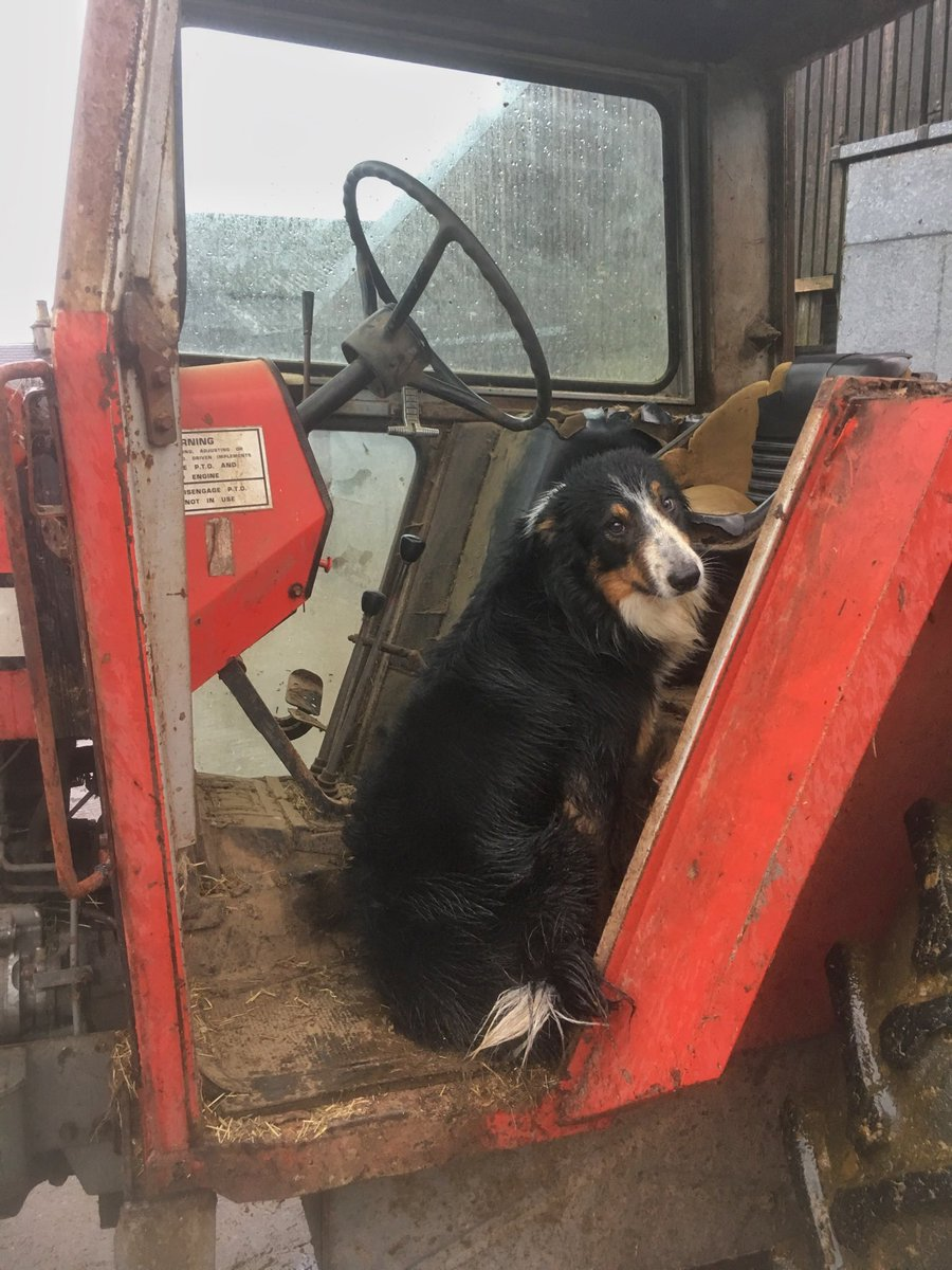 Wee Dearg takes cover from the unspeakable weather outside. Surprised he's not in the driving seat! #Collies #clever.