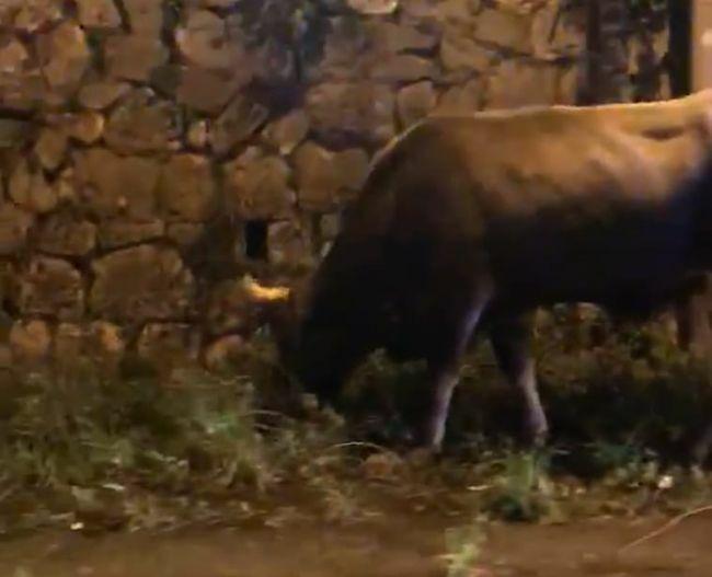 test Twitter Media - #Cronaca #Castellammare - Toro a passeggio sulla statale, interviene la polizia LEGGI LA NEWS: https://t.co/ycaSFxbiTD https://t.co/S1HSz2Ij3a