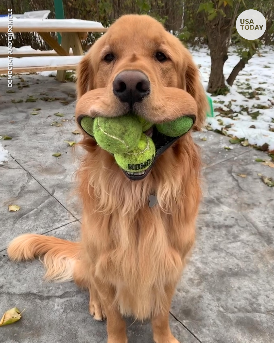 🎾 🎾 🎾 🎾 🎾 🎾 🎾 https://t.co/L3DSvVaSI8