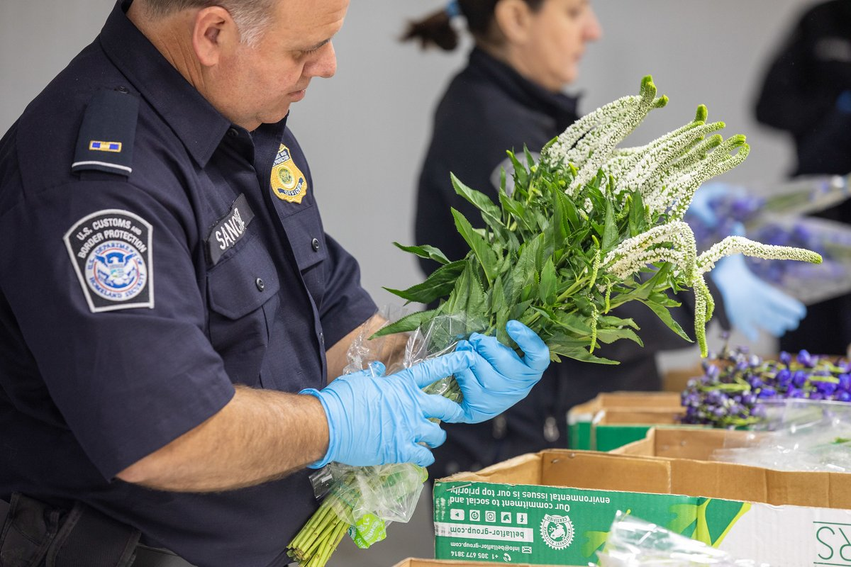 Valentine's Day may be in the rearview mirror, but CBP agriculture specialists will continue to be on the lookout for hitchhiking pests all year round.