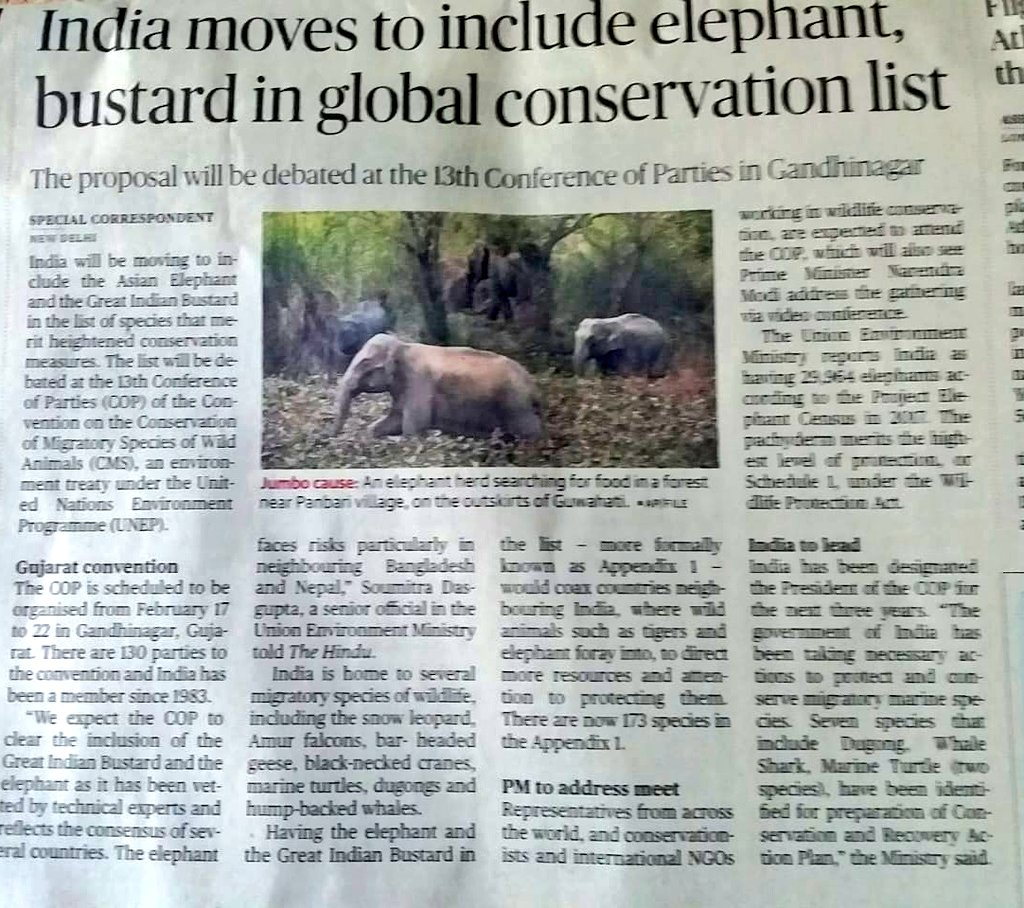 Here is a good news- India plans to propose 3 species to be included in the Migratory Species Appendix1 - Asiatic Elephant, Great Indian Bustard, Bengal Florican. Dugong, whale shark and Marine turtle species will have its own Conservation & Recovery Action Plan. A great move 👍