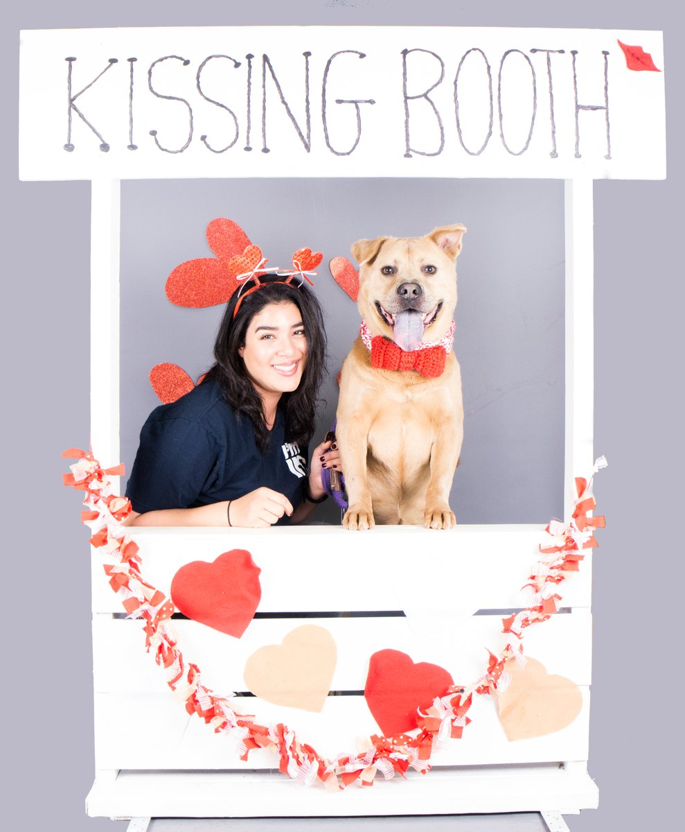 Happy Valentine's Day from Roofus Floofus! He is a long-timer at DeKalb County Animal Services whose adoption fee is waived this month! Come meet Roofus Floofus today - a true shelter sweetheart!  #ValentinesDay2020 #sheltersweetheart #In4LifeLine #OurCityOurAnimals