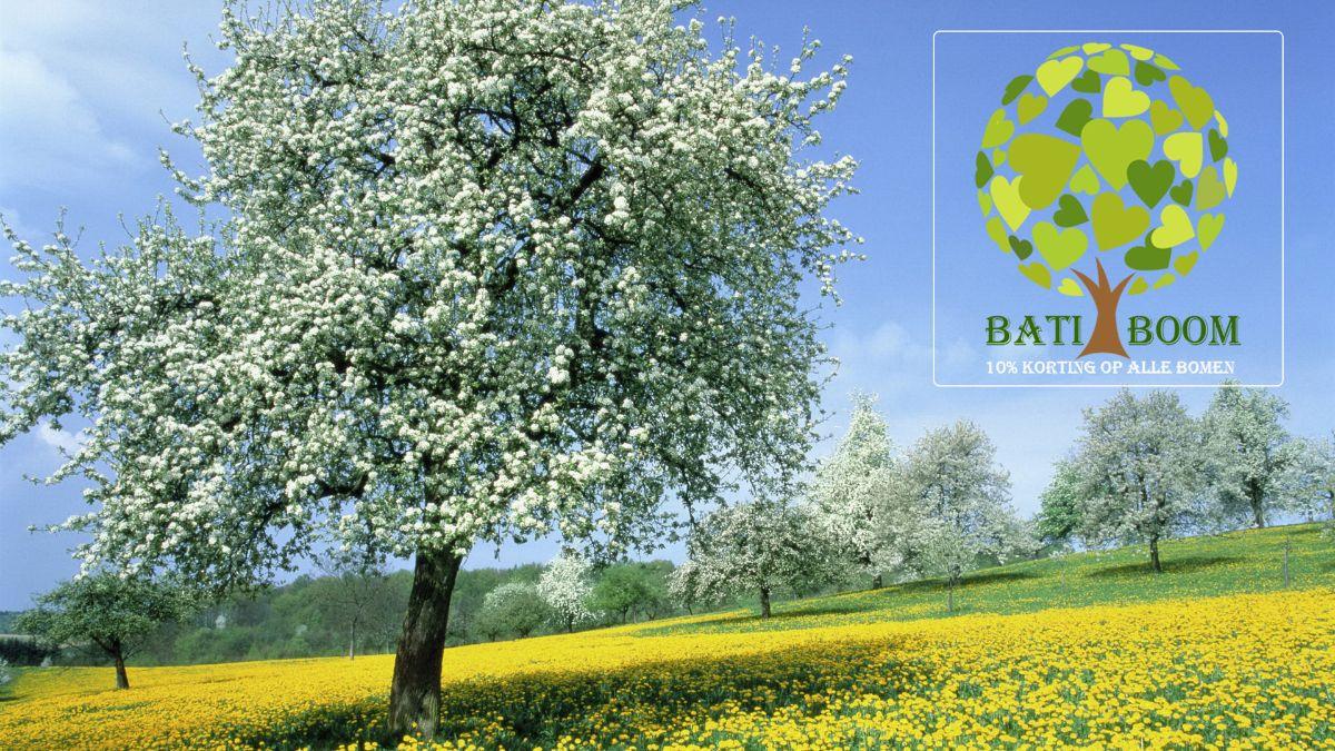 test Twitter Media - 🌳 Batiboom, de batibouw van je tuin. 10% korting op alle bomen.🌳 - https://t.co/WdRezbsfCd https://t.co/Ulg3vfKW2Z