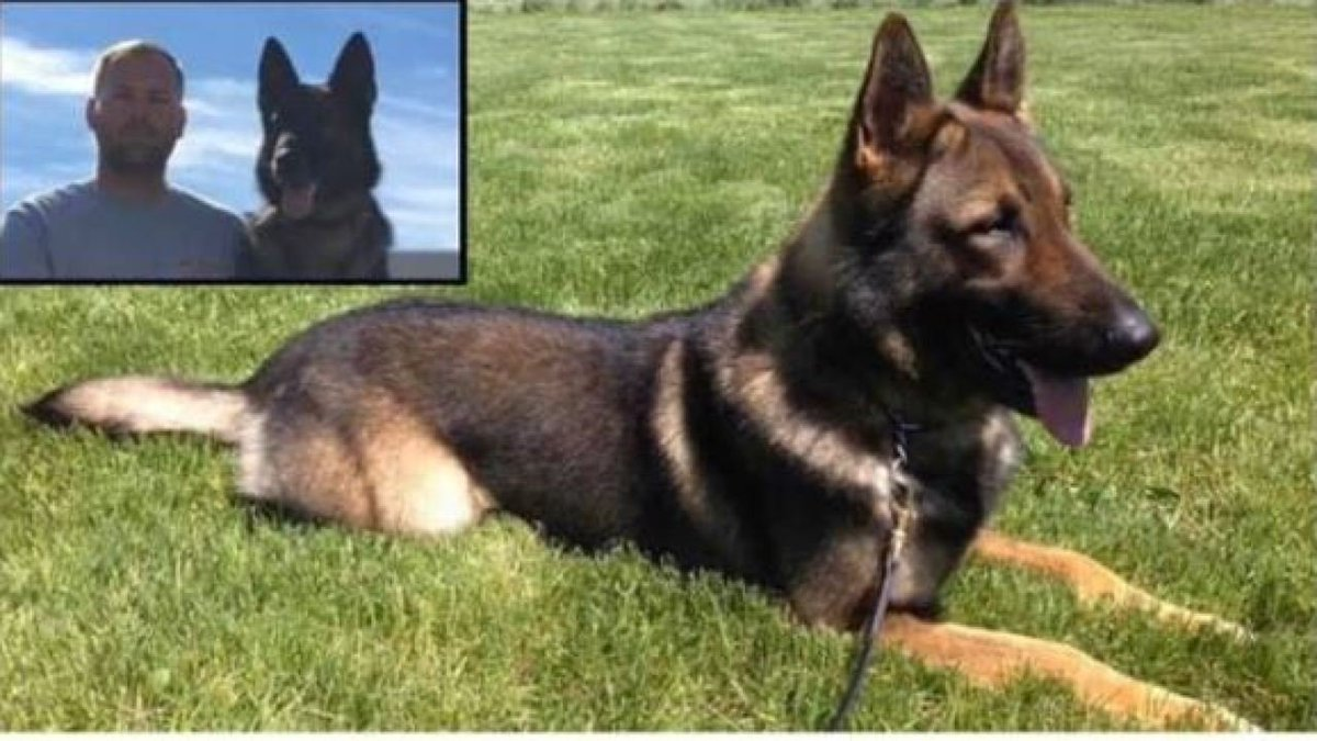 Martinsville police K-9 Dasko loses battle with cancer 😀RIP Dasko. Our condolences to Lt. Long and Martinsville PD  #dog #K9 #police #TopDogAE #Military #MAGA #KAG #2A #Trump #QAnon #LivePD #WaronDrugs @LivePDNation
