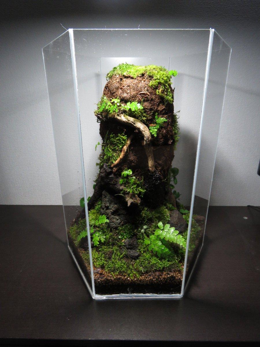 とりあえず完成! あとは苔と植物が成長すればいい感じになるはず!