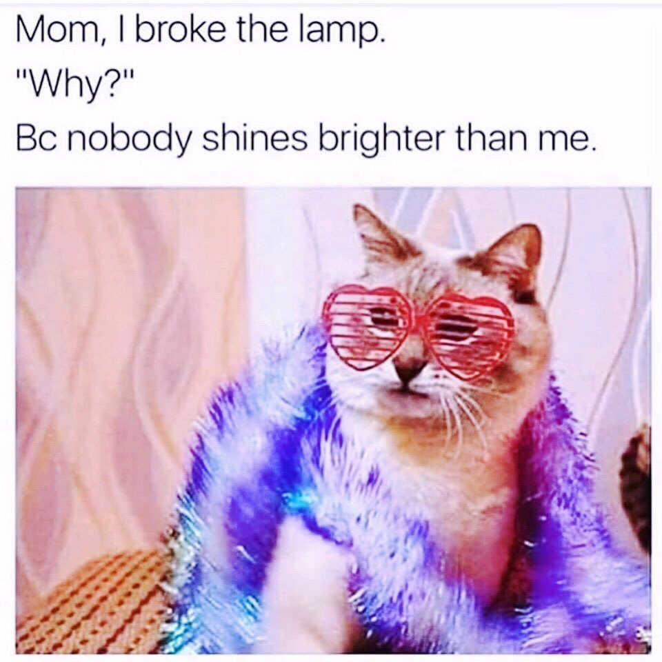 I am sorry but can't stop thinking about @taylorswift13 when seeing this! 😂  ⭐️⭐️ I promise that you'll never find another like me ⭐️⭐️  RETWEET to vote #Me for the #BestMusicVideo for the #iHeartAwards  💖🐱🌈🦋💖 @taylornation13