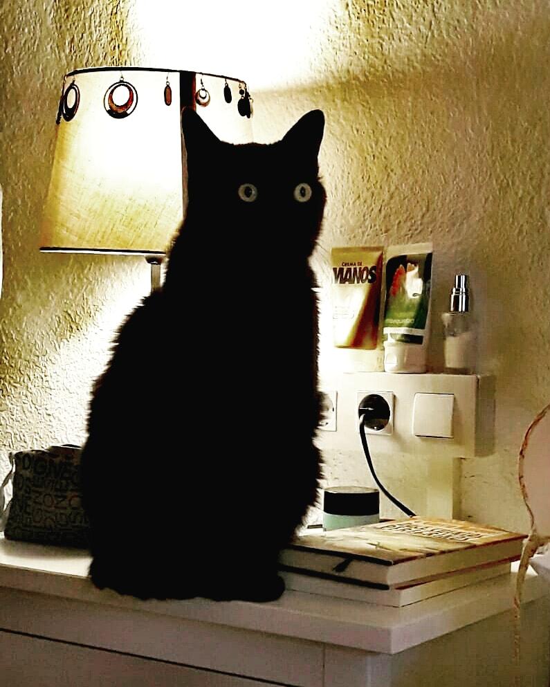 En el #DíaInternacionalDelGato nuestro #Baghee os quiere saludar..... #bagheera #cat #mycat