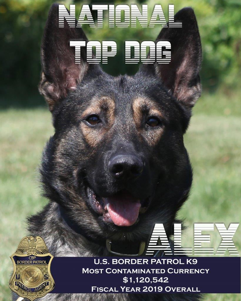 """It's always good to be the """"Top Dog"""" on #LoveYourPetDay   In 2019 USBP Detroit Sector K9 Alex lead @CBP in the discovery of over $1million in drug money! 💰🐕🦺"""