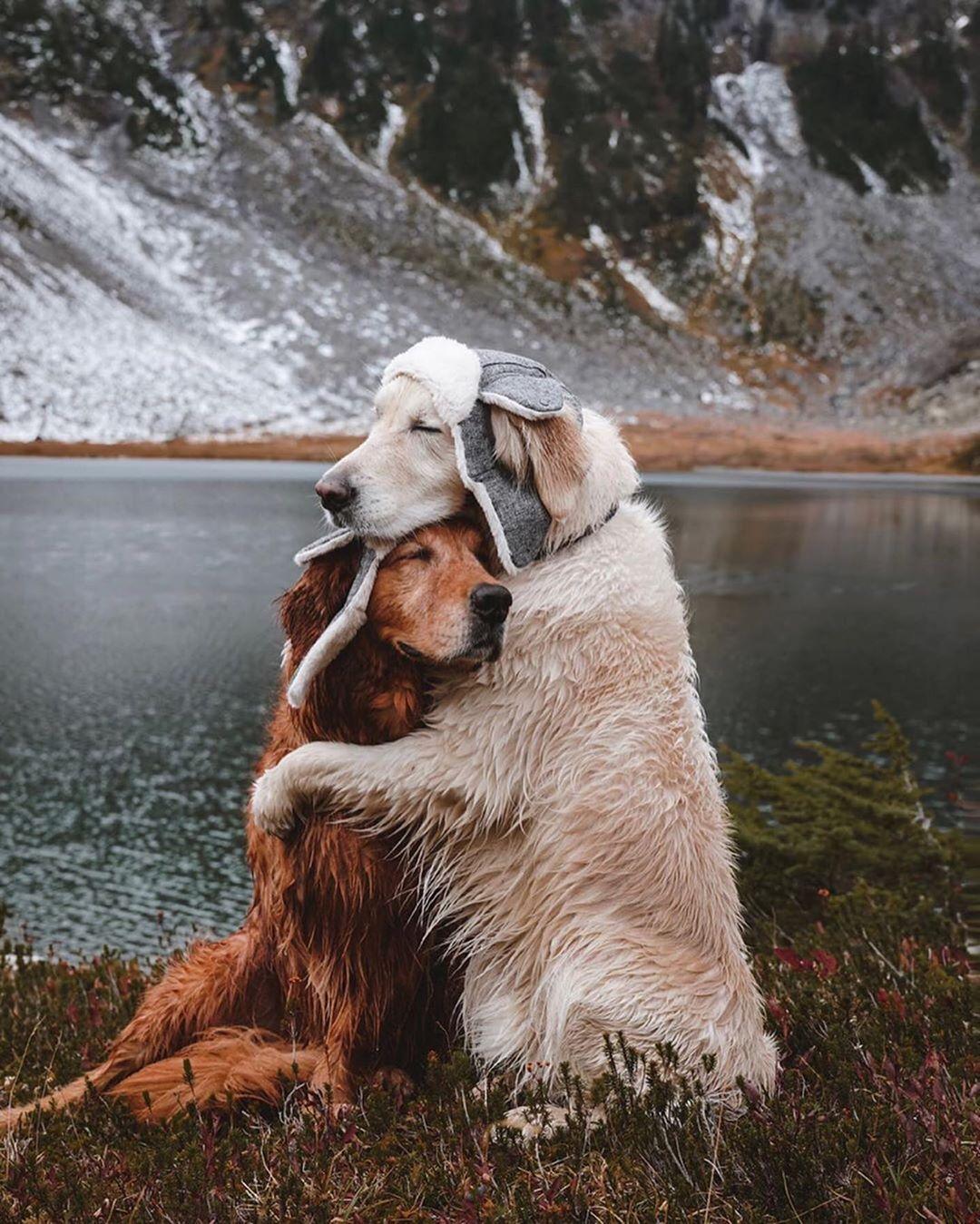 Best friends forever! Tag your best friend 🥰🥰🥰 📸 by: @wat.ki https://t.co/fb0C4OzCcB