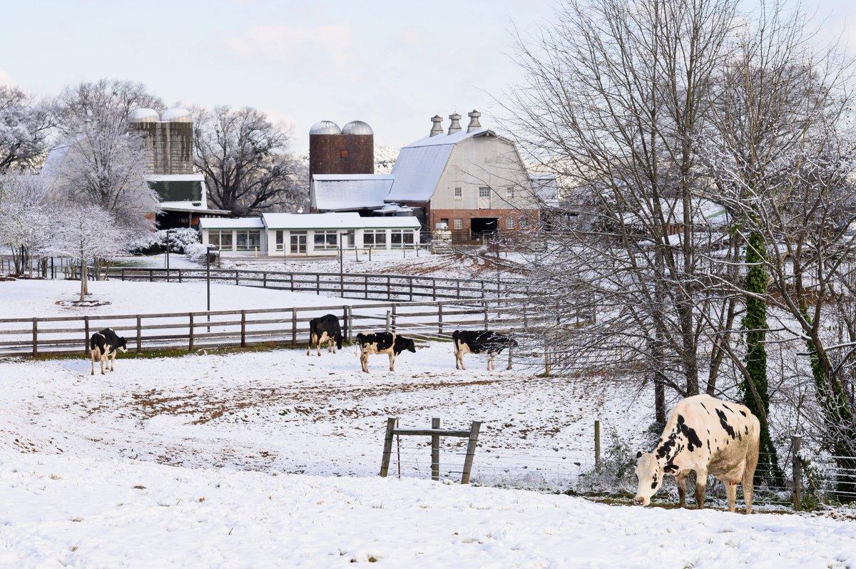 RT @NCStateVetMed: There's snow place like home. https://t.co/wuIWevXdQS