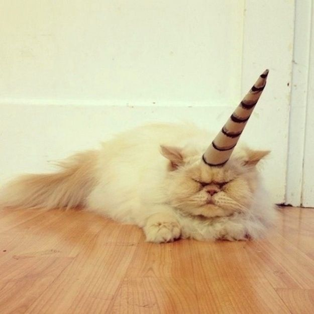 I'm sure you'll think this is cute. 26 Things Cats Are Not. LOL seriously, some of these are the best pictures I've ever... #mirth #chuckle #smirk #clever