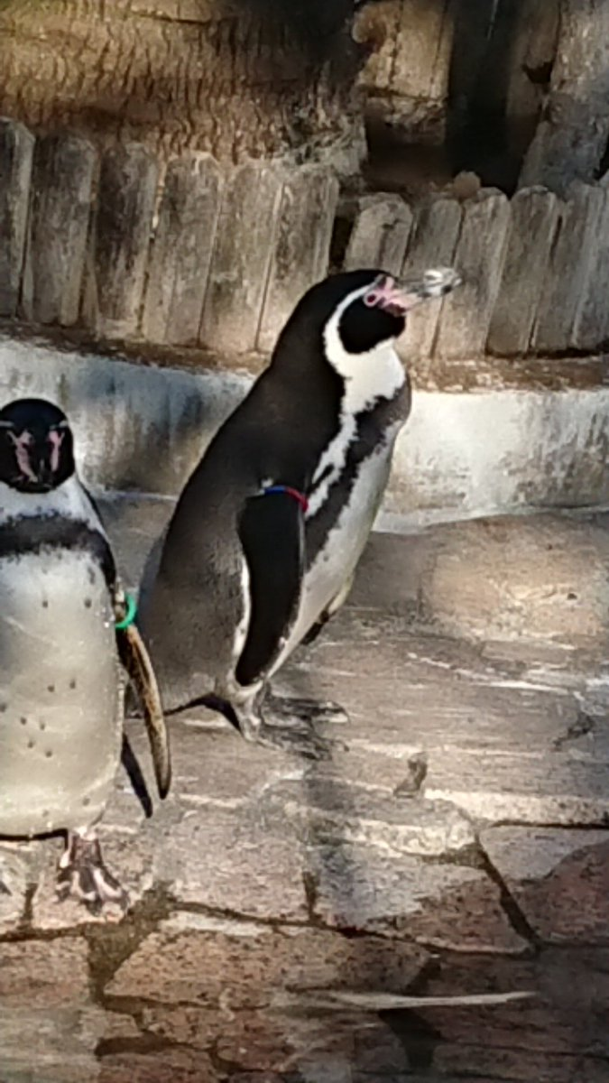test ツイッターメディア - やっと会えた。右赤青のはんぺん。 みんなお馴染みグレープ君の子です。 #江戸川区自然動物公園 https://t.co/UX5ttiKlke