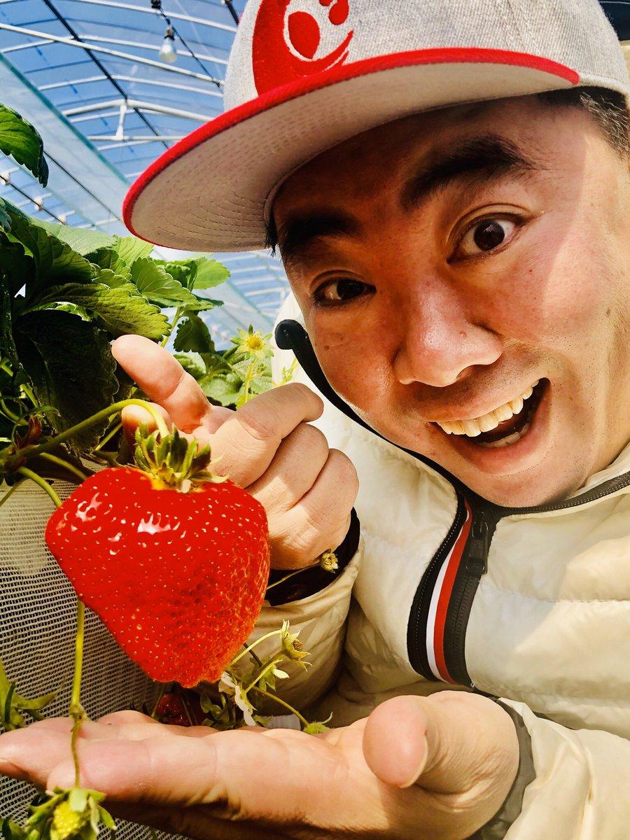 test ツイッターメディア - ウチのおかんの同級生の方が やっている 薩摩川内市樋脇町市比野の ひがし農園で いちご狩りをさせていただきました! まぁ美味い! まぁジューシー! まぁ大きい! トマトじゃないですよ! イチゴです! https://t.co/ERWIopU9P6