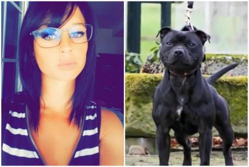Mort d'Elisa Pilarski: l'étau se resserre autour de Curtis et de la théorie d'un seul chien tueur