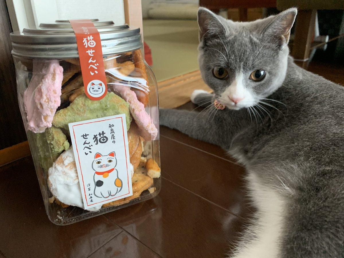 test ツイッターメディア - 【2019年8月17日】浅草にある和泉屋さんの猫煎餅🍘🐱 猫煎餅でしかも和泉屋さんというダブルネーミングに惹かれて買ったけど普通に美味しかった😊 https://t.co/lzIoVtswuo