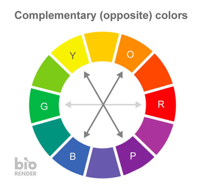 Visual #scicomm tip: 🎨 We often get asked, 'how do I pick good colors?' Referring to our color wheel, a powerful tool that the design industry uses is complementary colors. It's used to accentuate a focal point & pick harmonious palettes (avoid red+green for color-blindness) https://t.co/HCRNOo501N