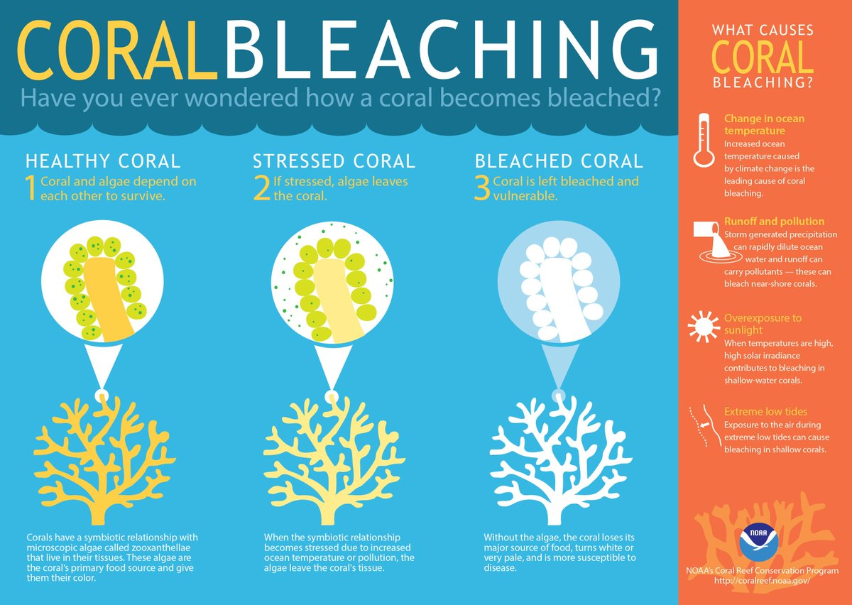 This is how Jamaica is protecting its coral reefs  #Jamaica #biodiversity