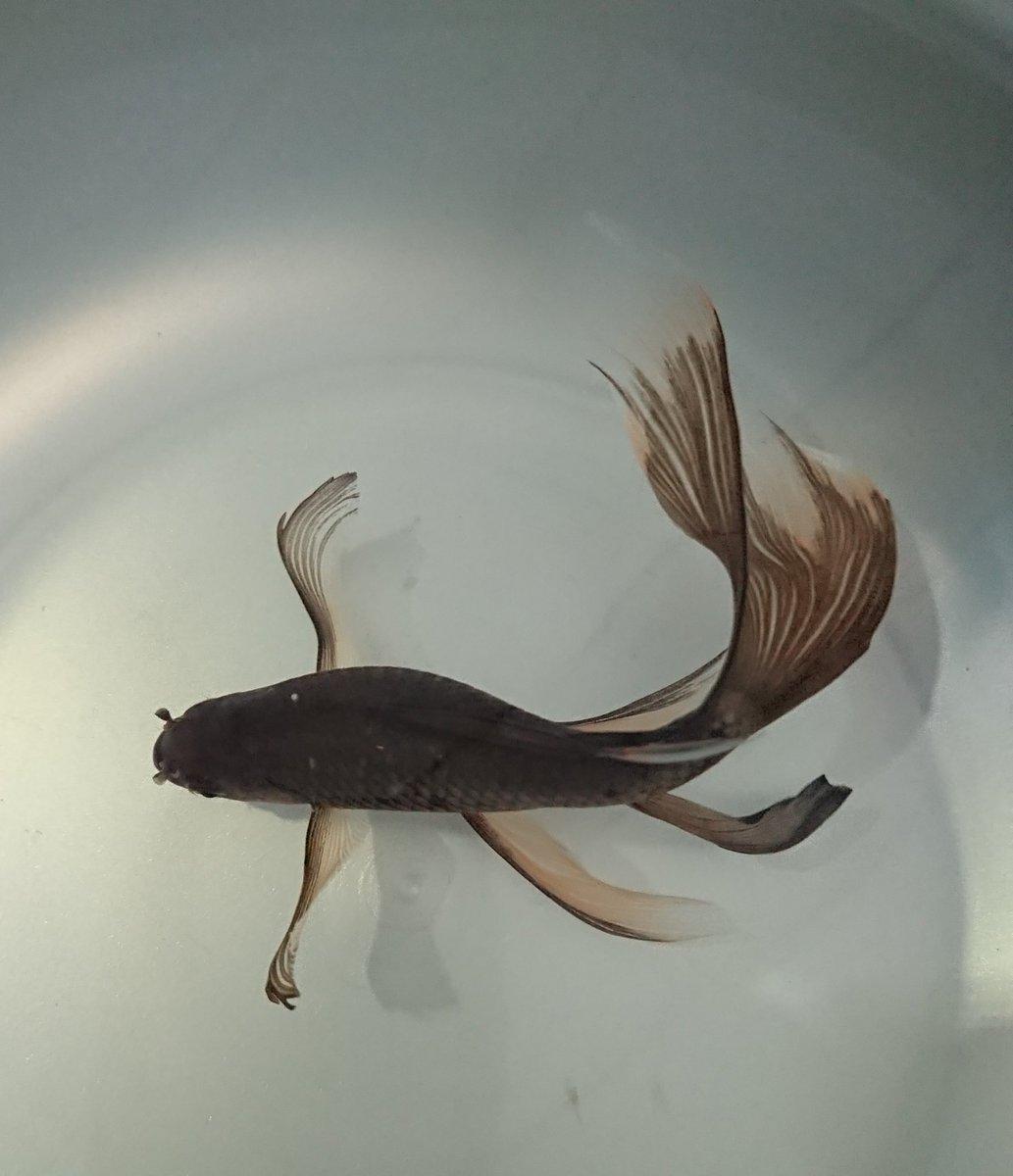 test ツイッターメディア - 玉澤の霜ばしら最後の一個 鉄魚以上に貴重?! アハッ( ̄O ̄) https://t.co/G4PCg7Dnix