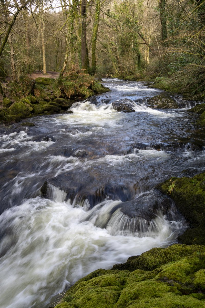 test Twitter Media - The River Erme, swelled by the recent heavy rains, passes through Longtimber Woods, Ivybridge. #Ivybridge #Walking #Woods #WoodlandWalk #River #Photography https://t.co/ZSlz7pVMp0