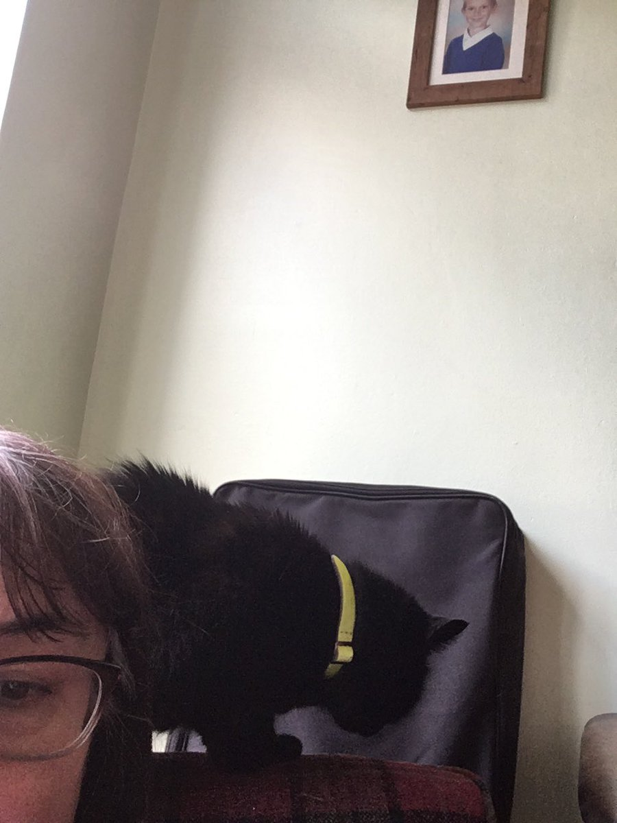 test Twitter Media - Trying to study about 💉🧪🌡🩹 phobias and Bruce decides to purr on the back of my rocking chair..... https://t.co/DQ1f7lGNim