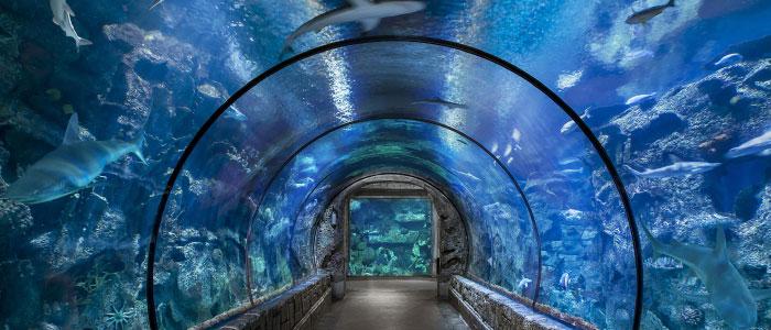 Mandalay Bay Shark Reef Aquarium Is Expanding  @MandalayBay #vegas #alwayschanging