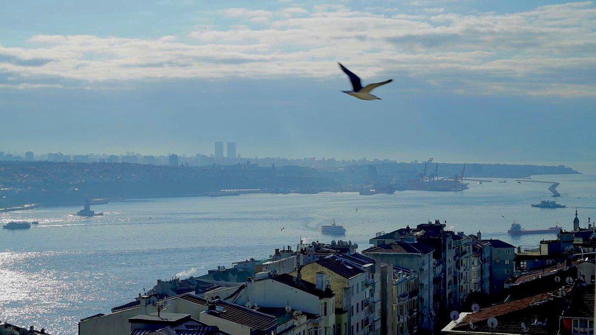 İstanbul deyince aklıma martı gelir.  Yarısı gümüş, yarısı köpük Yarısı balık, yarısı kuş. İstanbul deyince aklıma bir masal gelir.  Bedri Rahmi Eyüboğlu  Taksim Yerleşkemizden herkese iyi haftalar 🙋🏻♀️🙋🏻♂️ #BeykentÜniversitesi  #İşteGelecek https://t.co/1imm8Gkz61