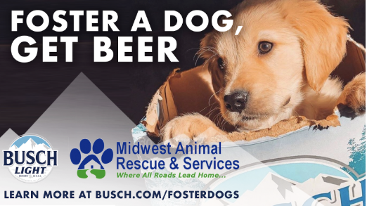 Everyone could use a companion for the couch right now. So if you foster (or adopt) a dog from Midwest Animal Rescue, we'll give you 3 months' worth of Busch to enjoy by their side. Go to  to learn more.   RT to spread the word.