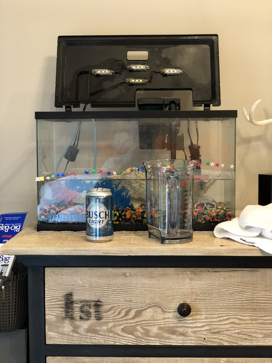 Things to do while drinking a @BuschBeer light. Clean Keelans fish tank.