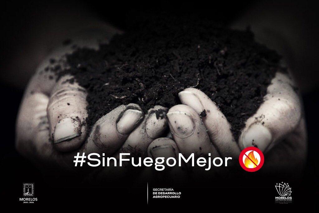 Tómalo en Cuenta La quema de residuos agrícolas afecta el rendimiento de cultivos de manera irreversible.   #SinFuegoMejor #NoLePrendas  #MorelosAnfitrióndelMundo