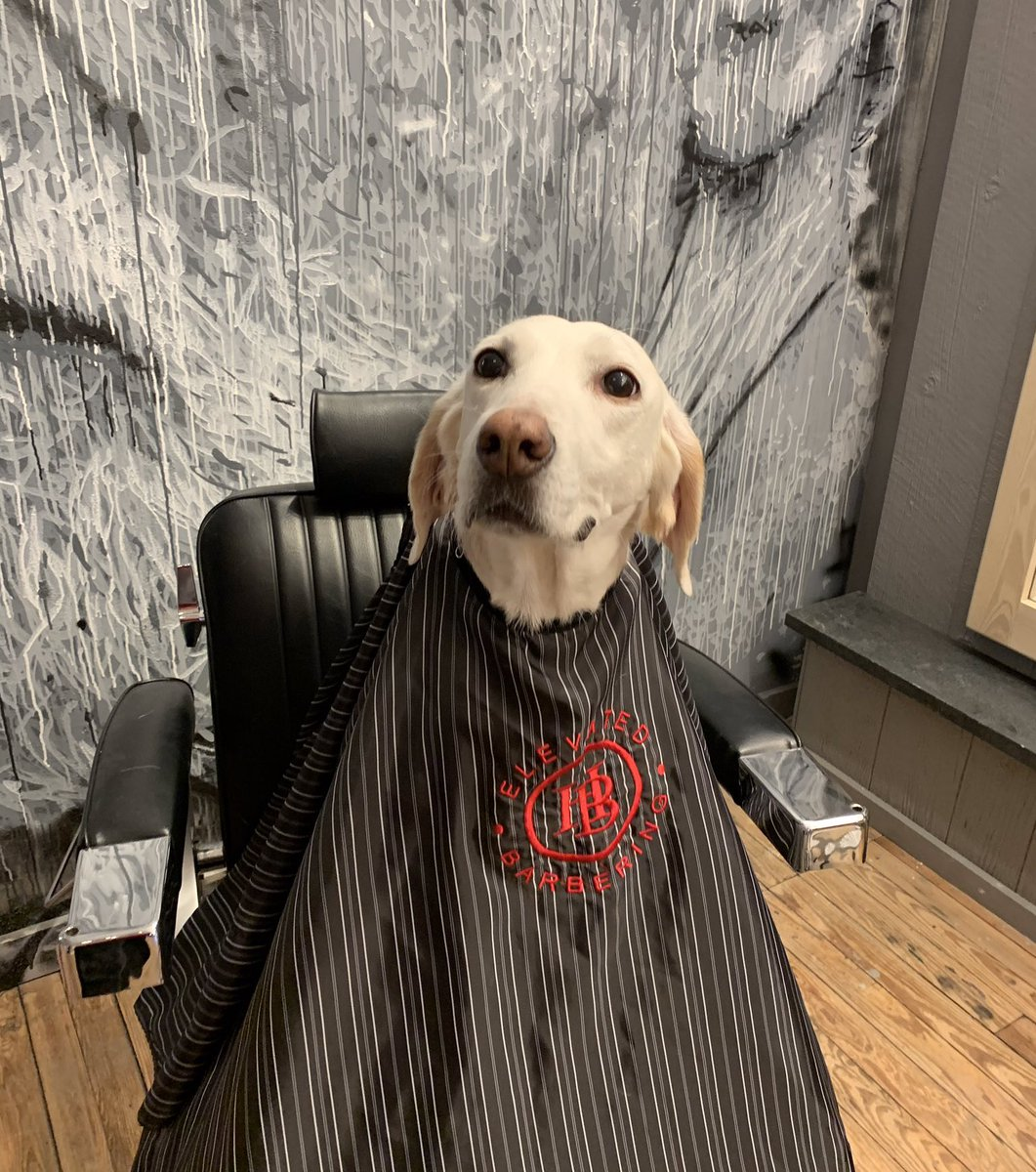 This is Peach. She doesn't even need a haircut. Just likes that the chair spins in circles. 13/10 please spin her