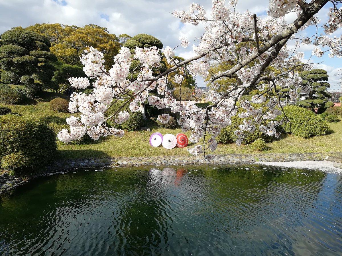 test ツイッターメディア - #エア花見 佐賀県随一の桜の名所「小城公園」の桜(まだ咲いてないから去年の写真)  今年は無理でも来年は観光においでませ! 桜色の小城羊羹食べながら見る桜は実に風流だよ! https://t.co/bg0aKV5aj5