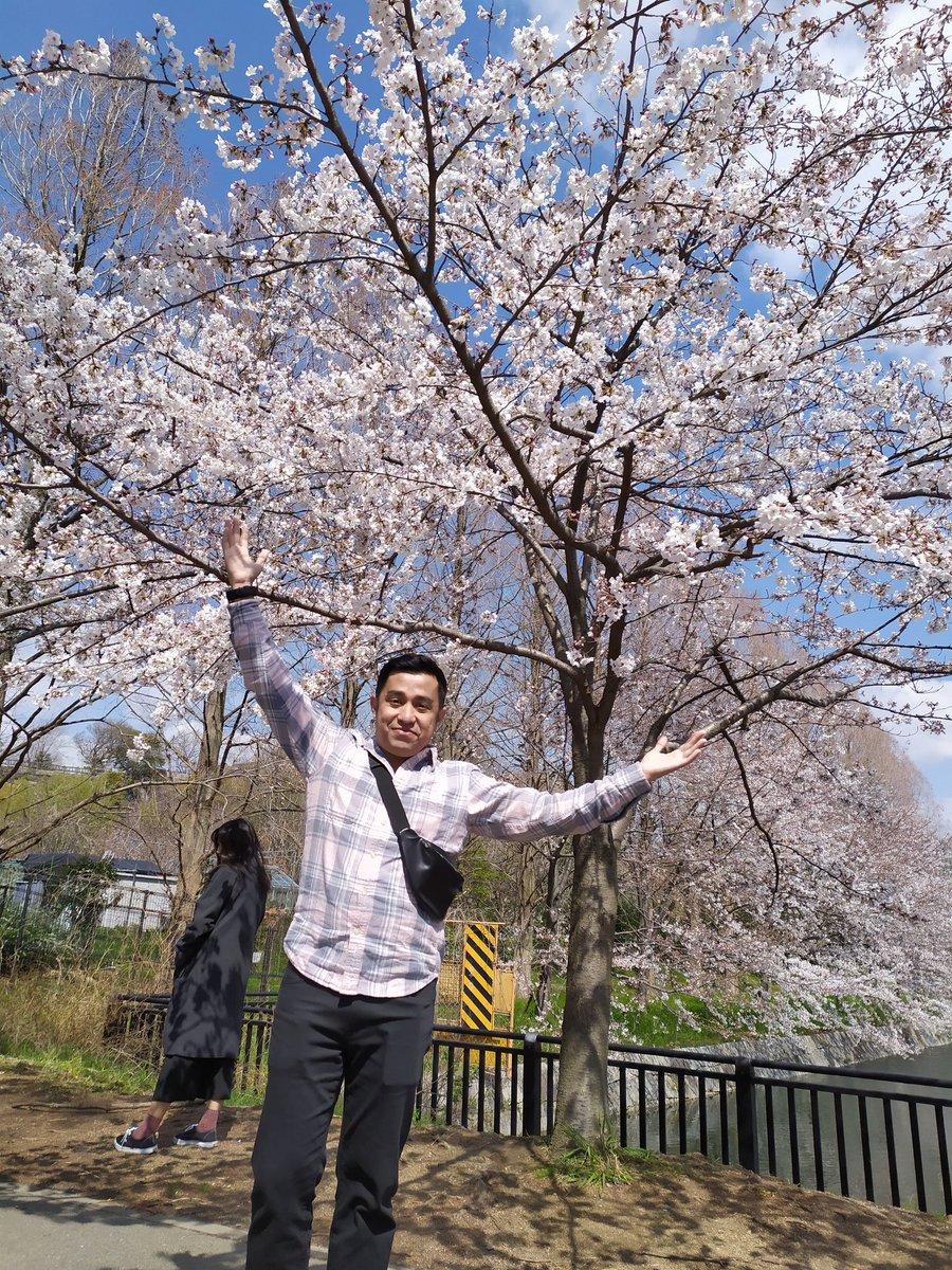 @heruekoprast Ini saya tahun kemarin menikmati the last sakura in osaka, before autumn 2019