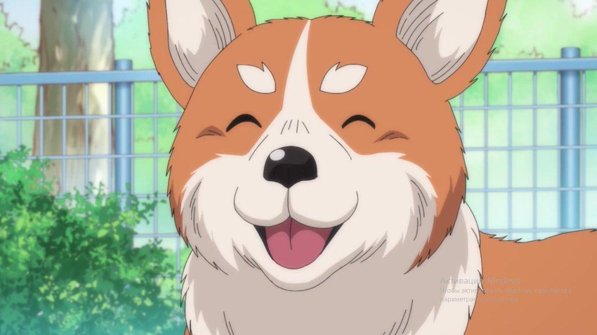 "test ツイッターメディア - とても面白いアニメ織田シナモン信長が終了しました。 どの大将がどの犬に生まれ変わったかを知るのは面白かった。(Ended fun anime Oda Shinamon Nobunaga. It was interesting to see which of the great generals was reborn into which dog. Big + for my favorite Sanada""Marutaro"" Yukimura💖 https://t.co/SRfsT1QeOm"