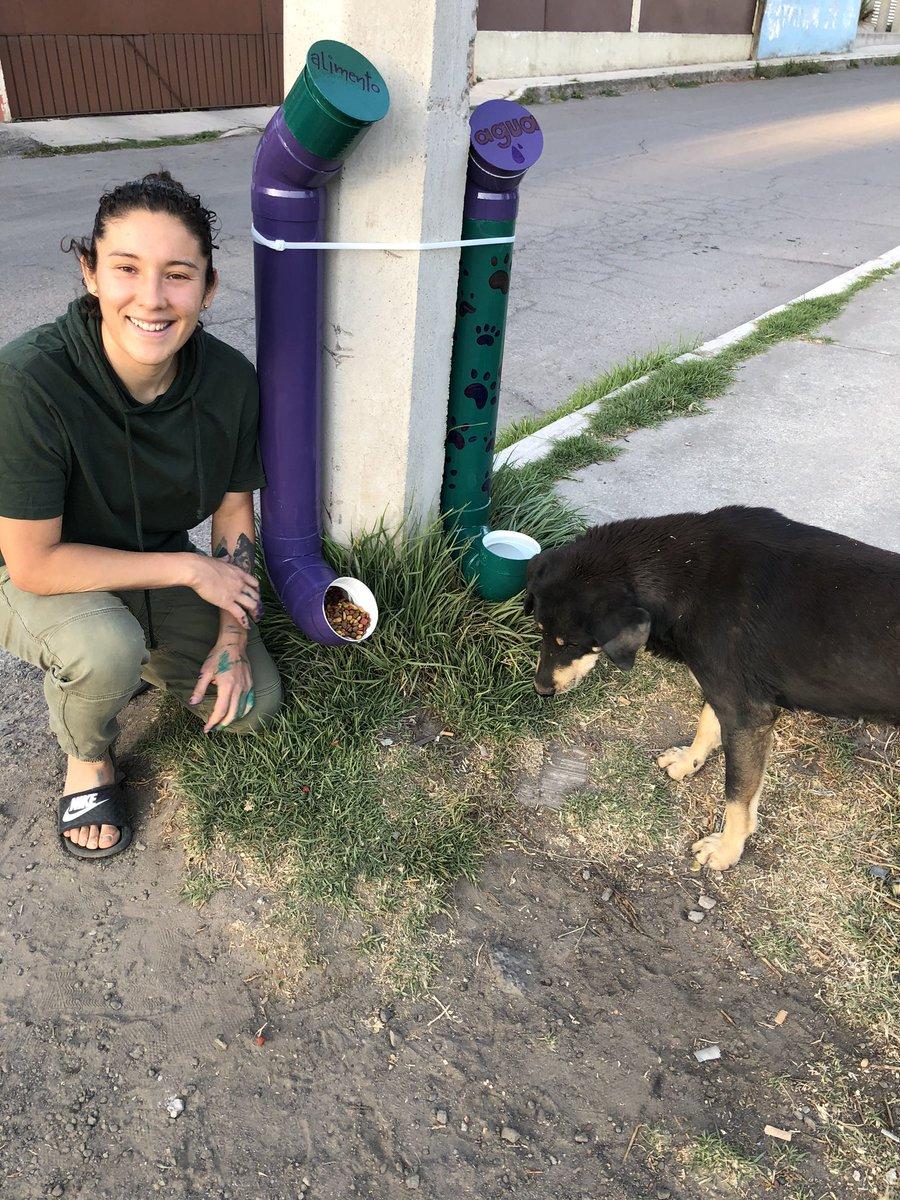 RETO: Ayuda a mejorar las condiciones de los perritos sin hogar de tu comunidad. #amoresperros