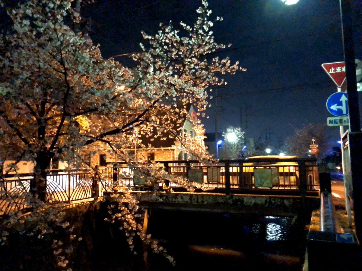 test ツイッターメディア - 夜の八瀬川です。 雨上がりのせいか街灯の光を受けてどこか艷やかな夜桜でした。  来週からはいよいよ4月ですね。  新しく太田に来られた皆さま、広報おおたはアプリでもご覧いただけます🌸ぜひご活用ください。 【マチイロ】 https://t.co/YbJGd5msOC https://t.co/cyoewzBnNe