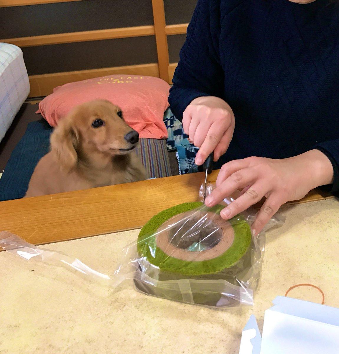 test ツイッターメディア - 京ばあむが切り分けられていく様子を見守る犬 https://t.co/vW1S2bjU48