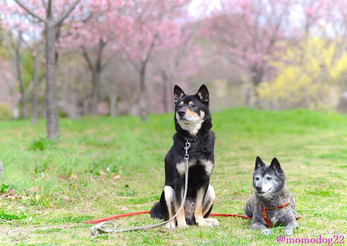 志村園長、しむら動物園ではうちの犬たちを取りあげてくださり、スタジオからも暖かく優しい言葉を犬たちに掛けて頂いたことは忘れません。ありがとうございました。ご冥福をお祈りします。