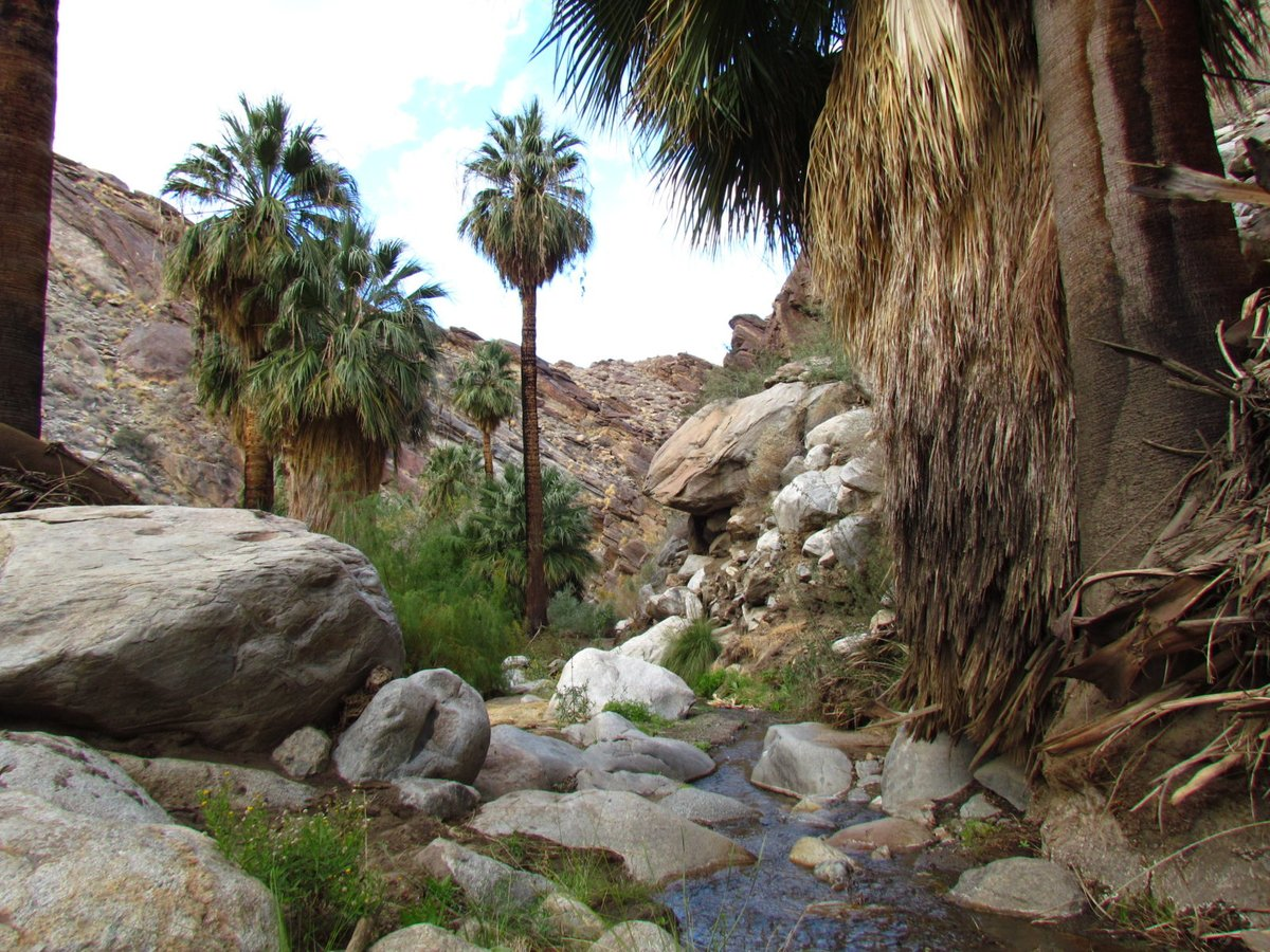 Murray Trail Heads Up Verdant Canyon to Waterfall  #visitcalifornia #palmsprings #coachellavalley