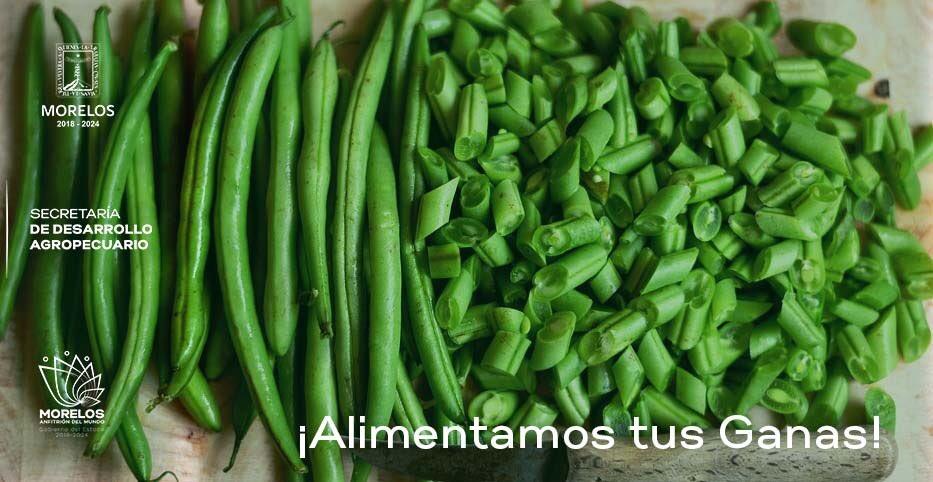 El Ejote es una gran fuente de vitamina A, antioxidantes y betacarotenos. También contiene vitamina C que ayuda a combatir infecciones y a mantener el sistema drenado de toxinas.   #AlimentamosTusGanas #MorelosAnfitrióndelMundo