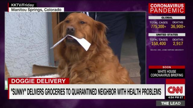 Dog delivers groceries to quarantined neighbor with health problems @jaketapper reports