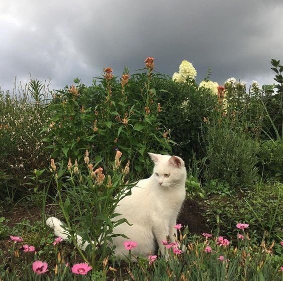 oh to be a cat in a field of flowers