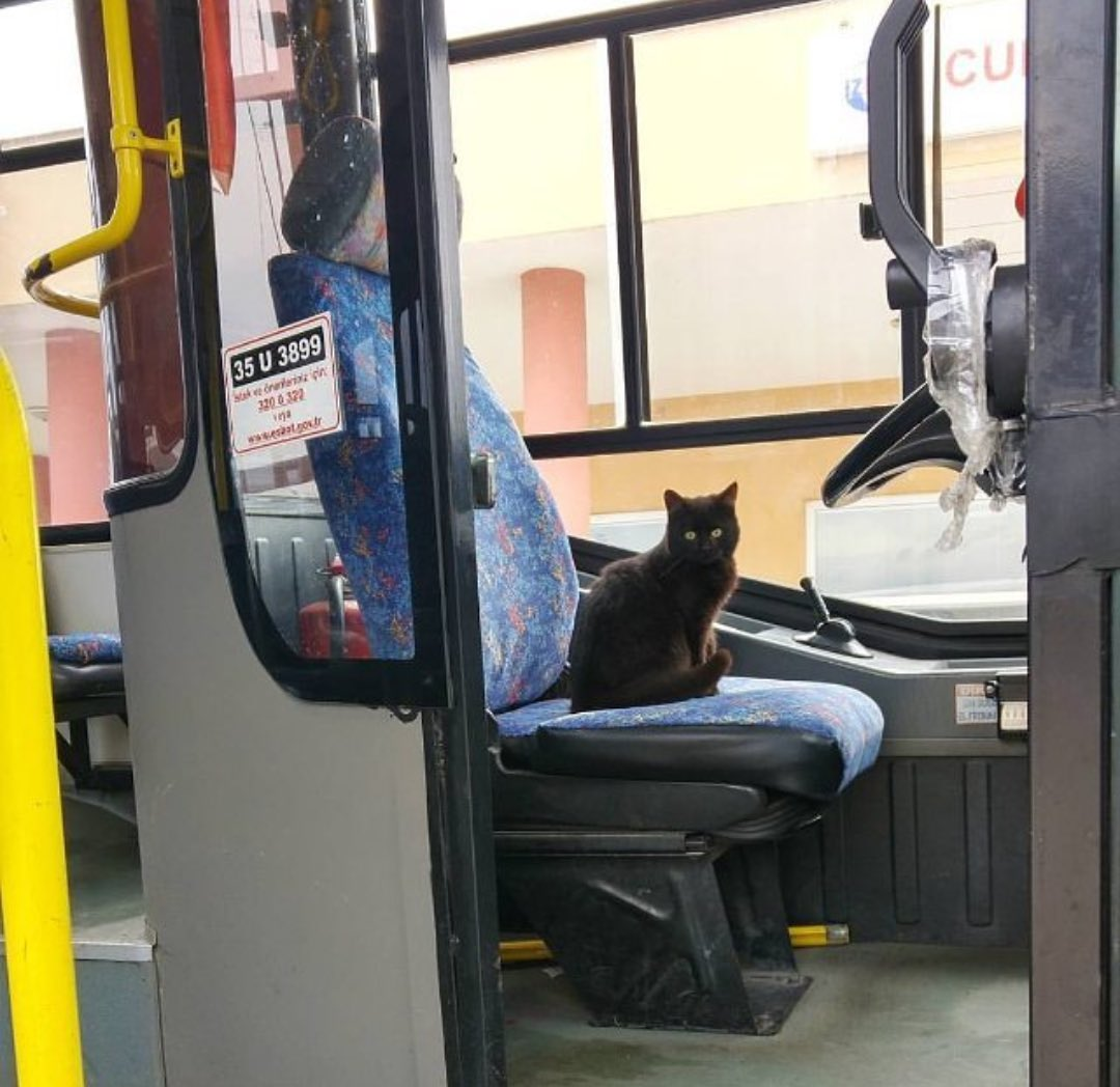 have a                               Thank you nice day.                           bus driver
