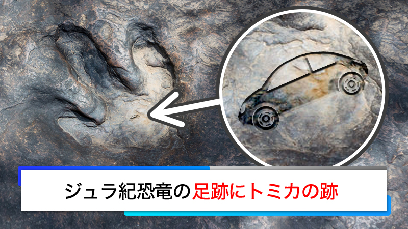 test ツイッターメディア - 【恐竜にも人気】日本とドイツの研究グループは、福井県勝山市でジュラ紀の小型恐竜の足跡にトミカの跡があることを発見した。  研究者らは「この時代の恐竜は特に乗用車のトミカを好み、いつでも遊べるよう足裏に忍ばせていた」と語る。  #トミカ50億周年 #エイプリルフール https://t.co/Qb3AlMMbk6