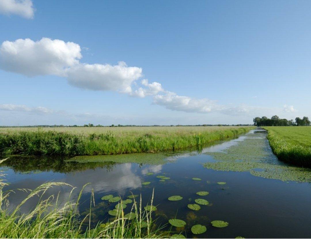 test Twitter Media - Bouw niet in het diepste putje van de polder Rijnenburg, schreven we in een brief aan minister @SvVeldhoven voor Wonen en Milieu. En gebruik water als uitgangspunt bij ruimtelijke plannen: https://t.co/LtUyvZEx27 https://t.co/prRO7Gh636