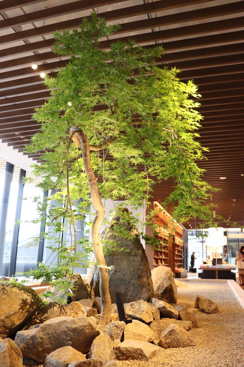 test ツイッターメディア - 【店内アート②】 プラントハンター西畠清順さんによる季節を感じる植栽が展示されています。 みどりに癒されながら本とコーヒーをお楽しみください。 https://t.co/pIw0S0lUyo