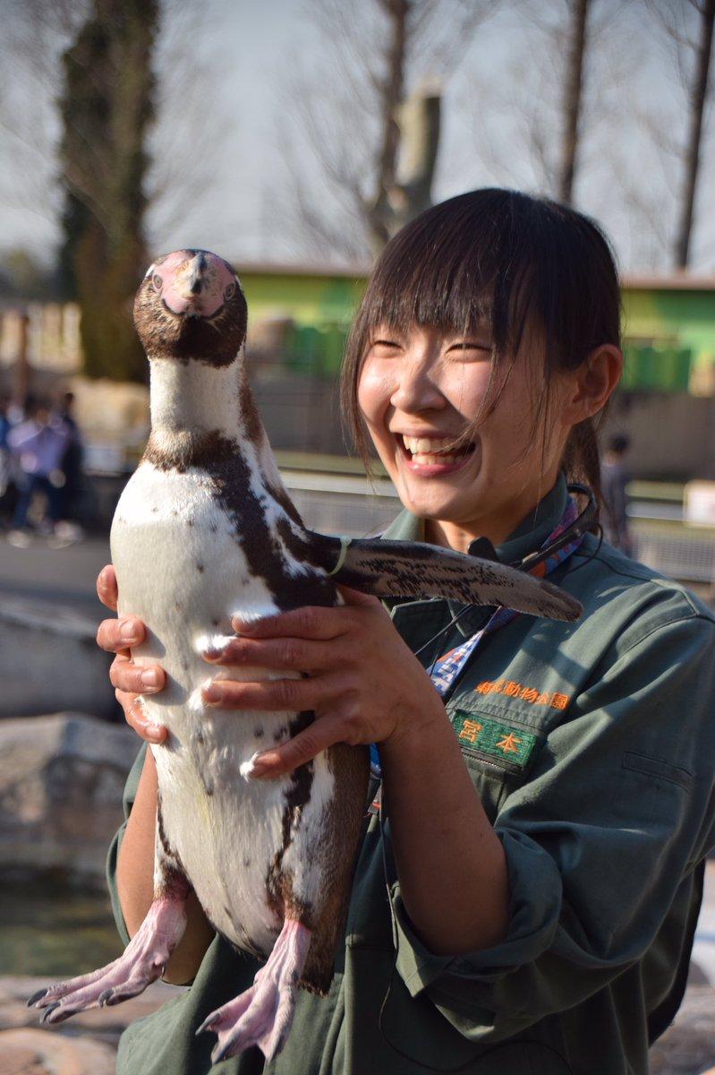 test ツイッターメディア - 天使と魔法使いです #東武動物公園 #フンボルトペンギン #えだまめ 20200326 https://t.co/DQOkzBOM6a