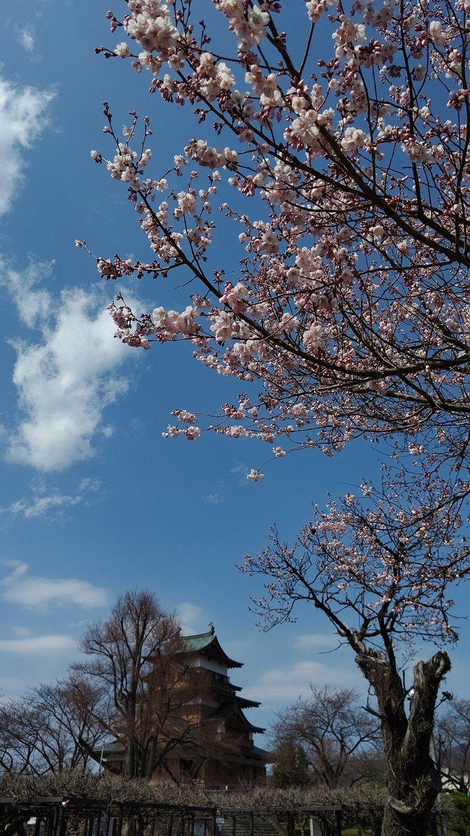 test ツイッターメディア - 地元にて、杏は咲いてたが、桜はつぼみでちと早かった。来週かな https://t.co/A7zyjpC5oh