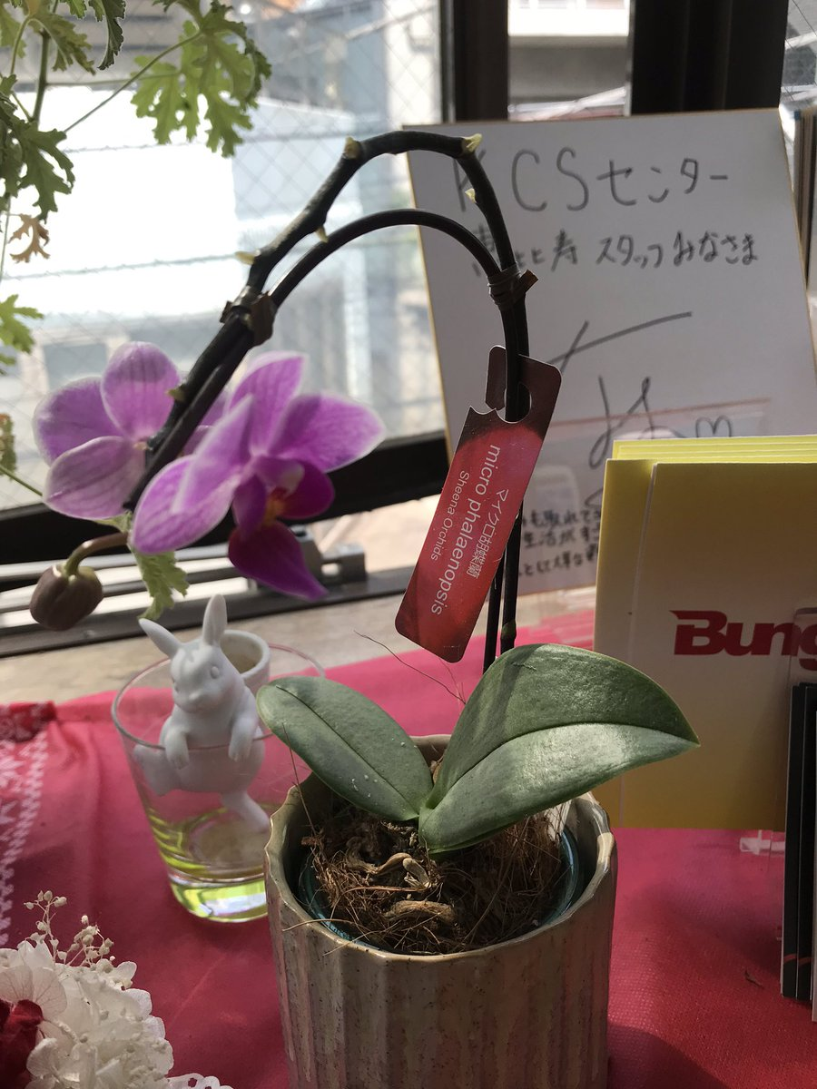 test ツイッターメディア - 12月にお客様からいただいたマイクロ胡蝶蘭、まだ花が咲いてます。そして、今週、また一つつぼみが開きました。 もう一つつぼみがあるなぁー。 春ですね♪ https://t.co/Ccbf7YtXHD